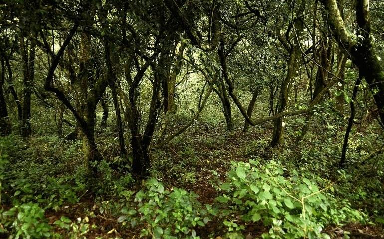 Kolli_hills_forest