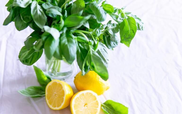 Lemon for healthy immune