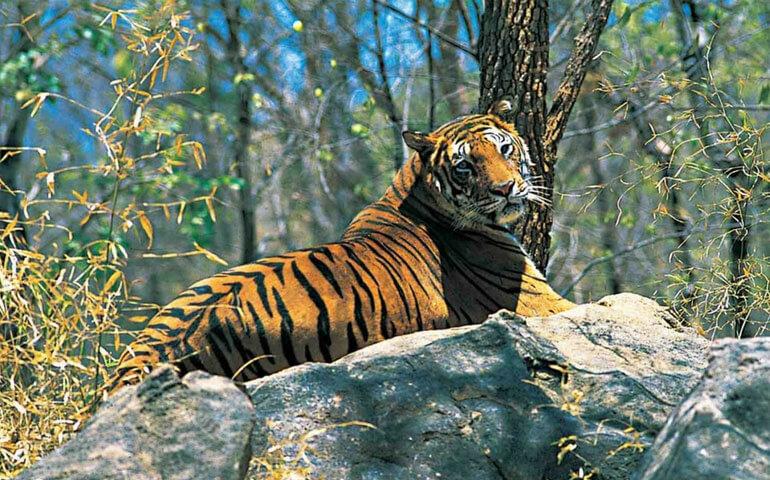 Parambikulam-Tiger-Reserve