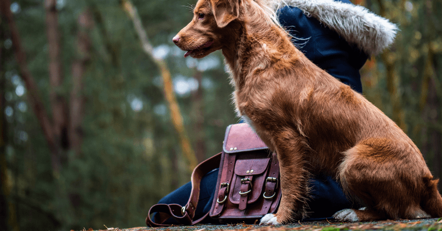 15 Best messenger bags for women 2021