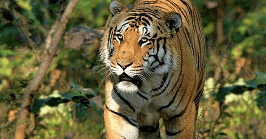 How to Reach Koundinya wildlife sanctuary