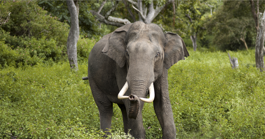 Wildlife At Koundinya Wildlife Sanctuary_